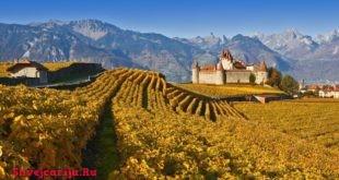 Музеи вина в Швейцарии